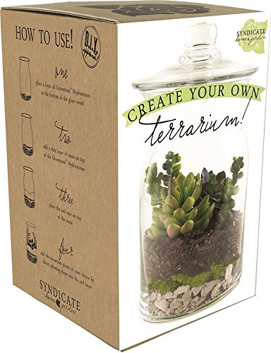 Syndicate Sales DIY Terrarium Kit 100-06-00