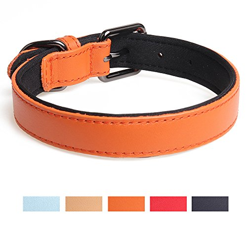 Leepets Neoprene Padded Leather Dog Collar for Small Medium Dog Comfort & Soft Puppy Collar with Adjustable Metal Muckle, 1 Inch Wide, Orange