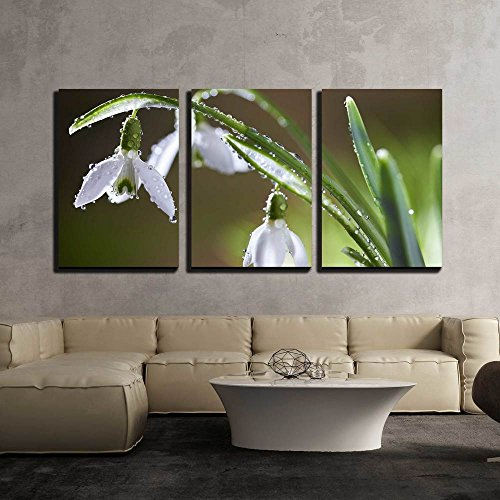 Spring Snowdrop Flowers with Dewdrops x3 Panels