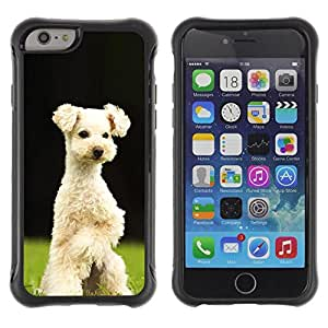LASTONE PHONE CASE / Suave Silicona Caso Carcasa de Caucho Funda para Apple Iphone 6 PLUS 5.5 / Lakeland Terrier Sealyham Puppy Dog