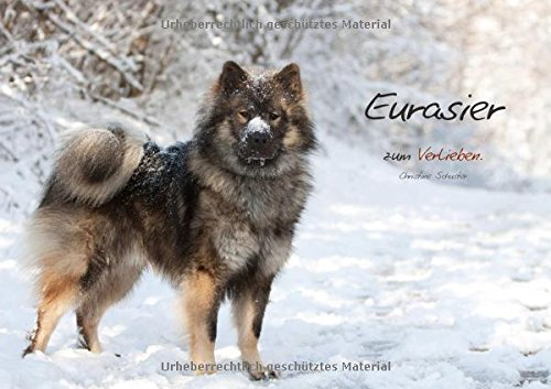 Eurasier zum Verlieben (Posterbuch DIN A4 quer): ...eine Liebeserklärung an meinen Eurasier