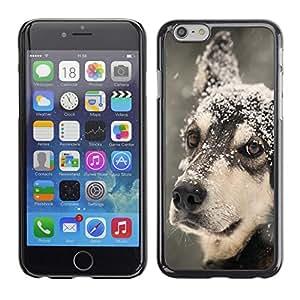 TopCaseStore / la caja del caucho duro de la cubierta de protección de la piel - Siberian Husky Winter Snow Sledge Dog - Apple iPhone 6 Plus 5.5