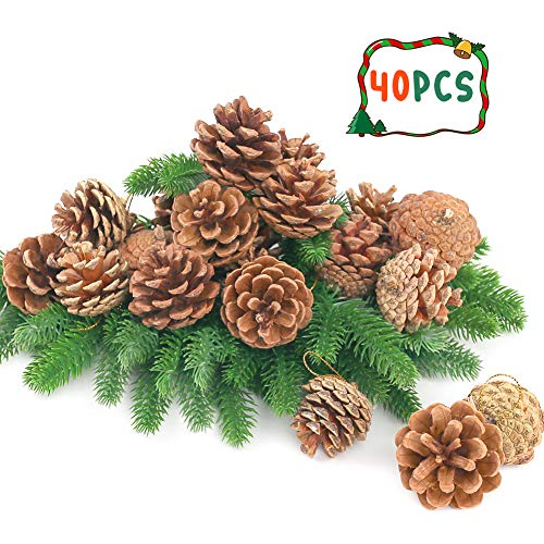 smaller than i thought but they are real pinecones