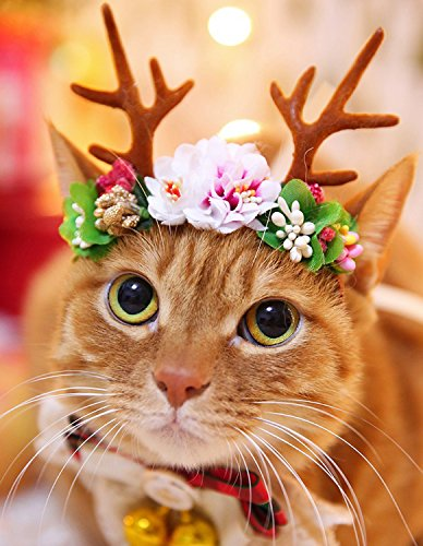 BWOGUE Pet Antlers Headband Holiday Christmas Halloween Costume for Dogs Cats Hair Accessories ()