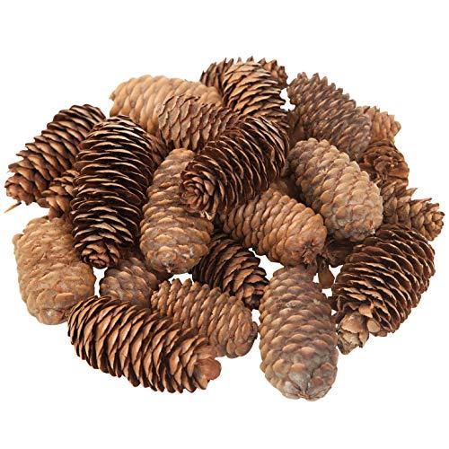 handrong - 45 Conos de Pino de Diferentes tamaños con Pinchos Naturales para Manualidades, árbol de Navidad, decoración de...