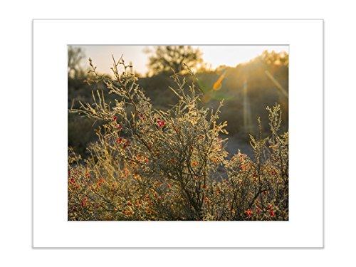 Sunset Cactus Botanical Desert Southwestern Nature Photo 5x7 Inch Matted (Botanical Setting)