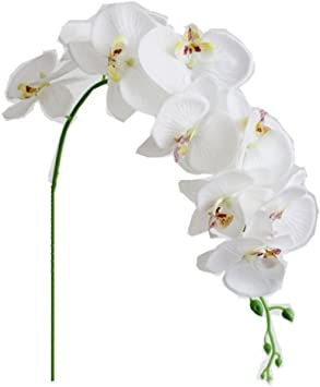 Amazon Com Ximkee 1 X Artificial Butterfly Orchid Flower Plant