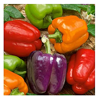 David's Garden Seeds Pepper Bell Rainbow Blend SVPEP171 (Multi) 50 Organic Seeds