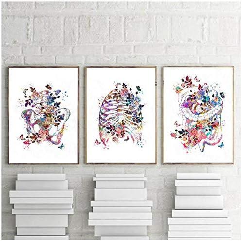 解剖器官ポスター人体解剖プリント絵画脳心臓肺解剖壁アート画像クリニック医療室の装飾-50センチ×70センチ×3ピース(フレームなし)