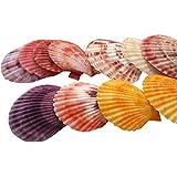 Julie Wang 20pièces coquillages colorés. Coquilles Saint-Jacques pour décoration nautique, loisirs créatifs