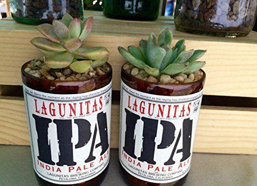 Lagunitas IPA 12 oz Glass Bottle Succulent & Cactus Planter