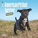 2017 American Pit Bull Terrier Puppies Mini 7x7 Wall Calendar Dogs Pups Puppy {jg} Great Holiday Gift Ideas - Great for mom, dad, sister, brother, grandparents, gay, lgbtq, grandchildren, grandma.