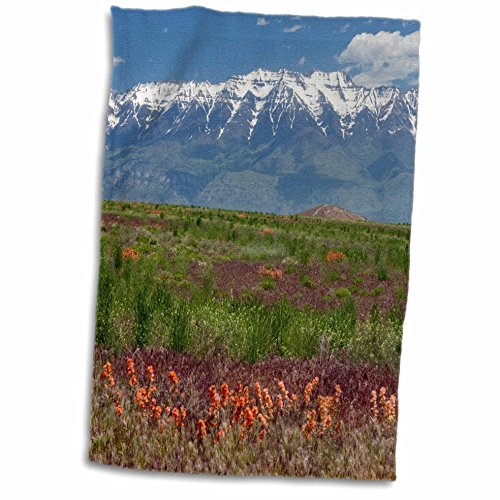 3Drose Utah  Mt  Timpanogos Rises Above Grasses And Forbs  Wasatch Mountains  Towel  15  X 22
