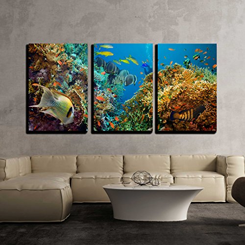Tropical Anthias Fish with Net Fire Corals on Red Sea Reef Underwater x3 Panels