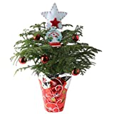 Costa Farms Live Christmas Tree, 18 to 20-Inches Tall, Decorated with Christmas Gift Wrap, Ornaments and Tree-Topper, Fresh From Our Farm