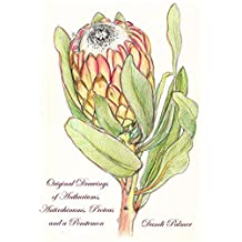 Colour Drawings of Anthuriums, Antirrhinums, Proteas and a Penstemon (Gift Books Book 1)