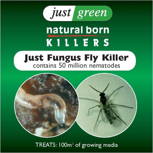 FUNGUSFLY KILLER - LARGE PACK 100sqm JUST GREEN