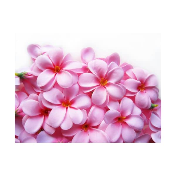 (100) Pink Hawaiian Plumeria Frangipani Silk Flower Heads – 3″ – Artificial Flowers Head Fabric Floral Supplies Wholesale Lot for Wedding Flowers Accessories Make Bridal Hair Clips Headbands Dress