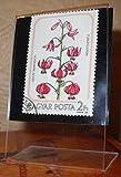 Desktop Stamp Art -International Postage Stamp Featuring Hungarian Stamp Flowers