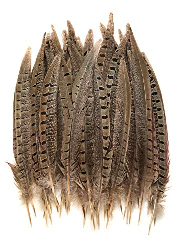 Ringneck Pheasant Tail Feathers 8-10
