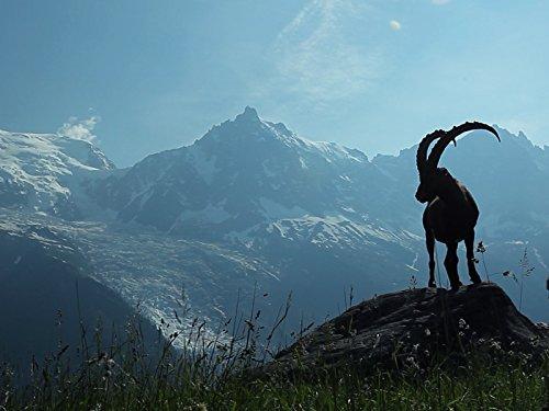 - Alpine Peaks