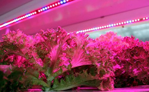 51Q0blJ5ayL - Lahoku LED Plant Grow Strip Light 16.4feet Full Spectrum SMD 5050 Red Blue 4:1 Rope Light with Power Adapter for Greenhouse Hydroponic Plant (5M)
