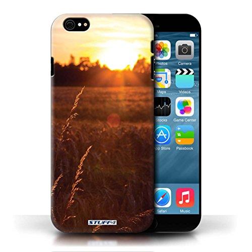 Etui pour Apple iPhone 6/6S / Champ de maïs conception / Collection de Coucher du Soleil