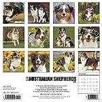 Just Australian Shepherds 2020 Wall Calendar (Dog Breed Calendar) 3