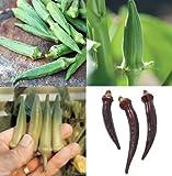 David's Garden Seeds Collection Set Okra RSL3342 (Multi) 4 Varieties 200 Plus Seeds (Open Pollinated, Heirloom, Organic)
