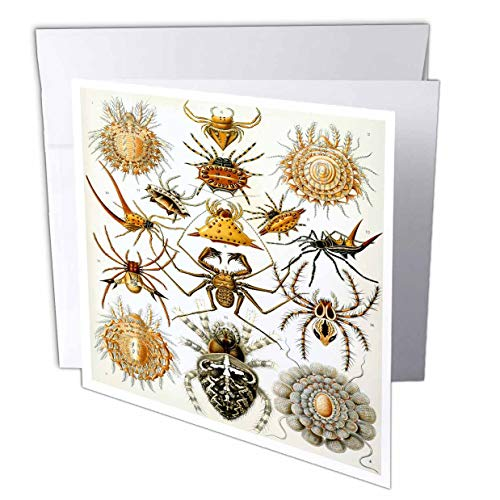 (3dRose Made in The Highlands - Art- Spiders - Print of a Series of Spiders - 1 Greeting Card with Envelope (gc_307837_5))