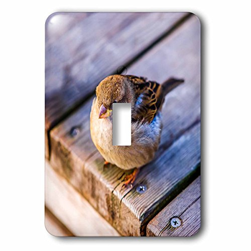 3dRose Alexis Photography - Birds - Fat sparrow on a wooden deck. Hard to fly after good lunch - Light Switch Covers - single toggle switch (lsp_270245_1) (Sparrow Lunch)