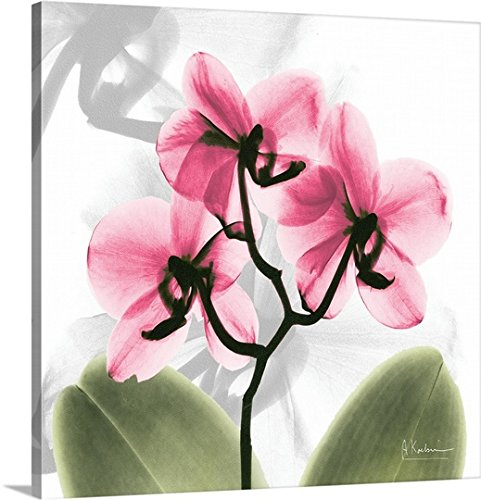 X-ray Orchid - 4