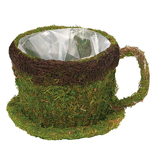 """Skalny Round Moss Cup with Saucer Planter, 6.25"""" x 6.25"""" ..."""