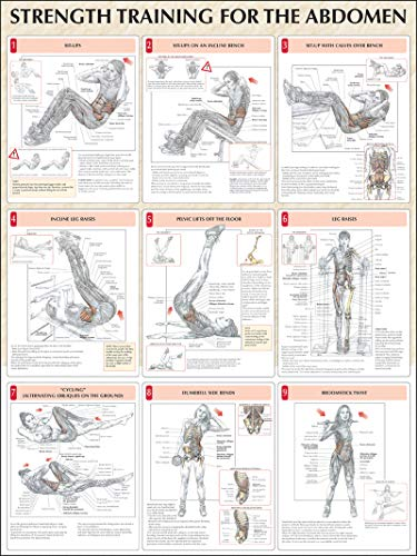 Strength Training Anatomy: Strength Training for the Abdomen Poster - Strength Training Anatomy Poster