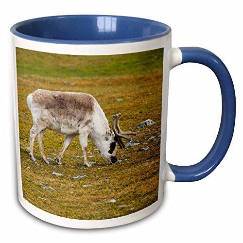 (3dRose Danita Delimont - Deer - Norway. Svalbard. Camp Millar. Svalbard reindeer grazing. - 15oz Two-Tone Blue Mug (mug_227763_11))