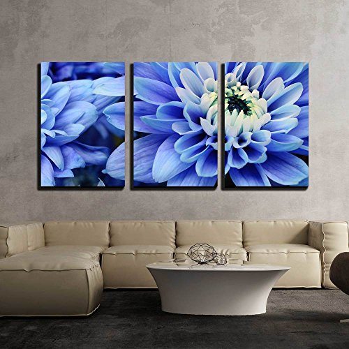 Close Up of Blue Petals Pistils and White Heart Flower of Aster for Background or Texture x3 Panels