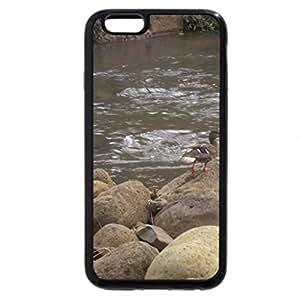 iPhone 6S / iPhone 6 Case (Black) Duck on the Rocks Waimea Valley