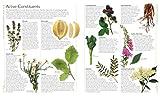 Encyclopedia of Herbal Medicine: 550 Herbs and