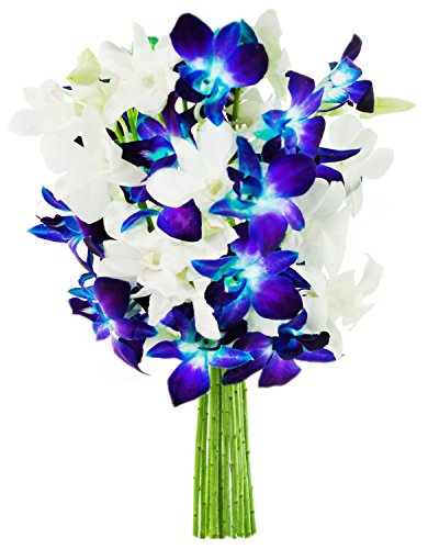 Starry Night in the Tropics: Bouquet of 5 Blue Dendrobium Orchids & 5 White Dendrobium Orchids from Thailand - by KaBloom