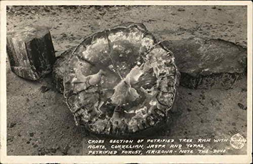 Cross Section of Petrified Tree Petrified Forest National Park, Arizona Original Vintage Postcard from CardCow Vintage Postcards