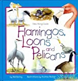 Flamingos, Loons and Pelicans, Mel Boring, 1559719427