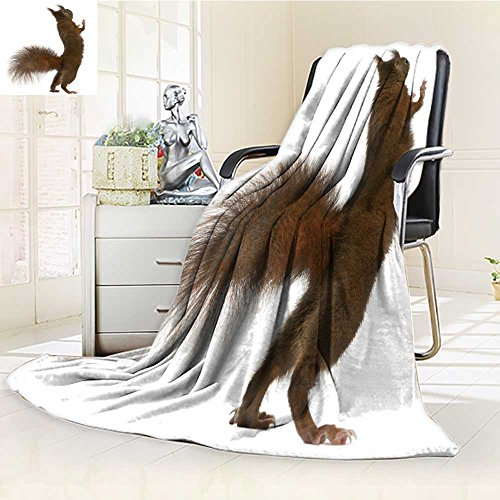 (Jiahonghome Fleece Blanket 300 GSM Anti-static Super Soft eurasian red squirrel on hind legs sciurus vulgaris years old in front of white Warm Fuzzy Bed Blanket Couch Blanket(90