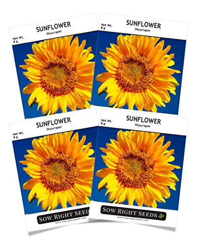 Sow Right Seeds - Jumbo Packet of Skyscraper Sunflower Seeds to Plant (75+ Seeds); Up to 12 Feet Tall! Non-GMO Heirloom Seeds; Full Instructions to Grow; Wonderful Gardening Gifts (4 Packets)