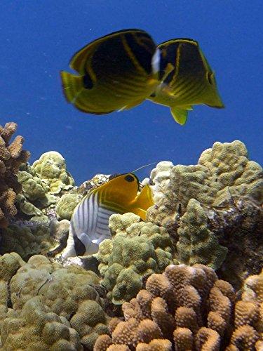 (Eco Fish Tank Hawaii)