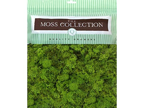 Quality Growers 1598 Floral Moss Aspen Wood Excelsior Natural Medium