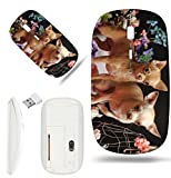 Luxlady Wireless Mouse White Base Travel 2.4G Wireless Mice with USB Receiver, 1000 DPI for notebook, pc, laptop, computer, macdesign IMAGE ID 25892804 Two Chihuahuas posing against the backdrop of fl