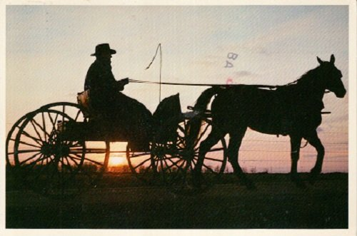 Used Postcard entitled Amish Tranquility Horse-Driven -