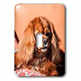 3dRose Danita Delimont - Dogs - Cavalier King Charles Spaniel on pillow - Light Switch Covers - single toggle switch (lsp_258145_1)