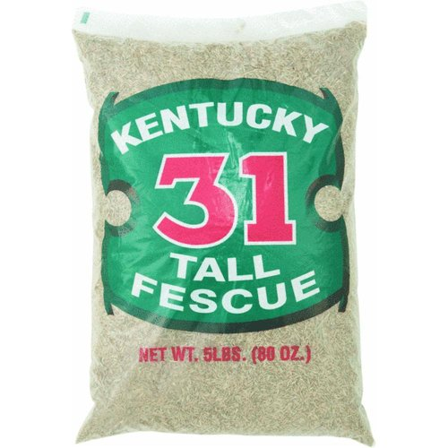 Kentucky 31 Tall Fescue - Barenbrug Kentucky 31 Tall Fescue Grass Seed 1000 Sq. Ft. Polybagged 5 Lb.