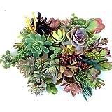 30 Succulent Cuttings